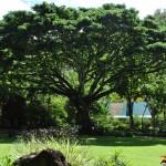 Puu on puude kõrgune