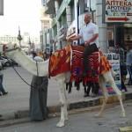 Jahimehe hobune
