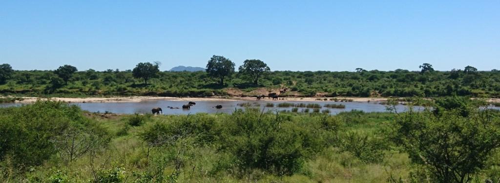 Battle of Kruger