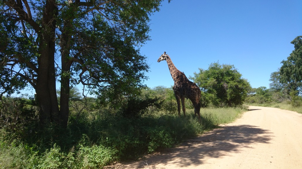 Lõuna Aafrika, Kruger Park 2017